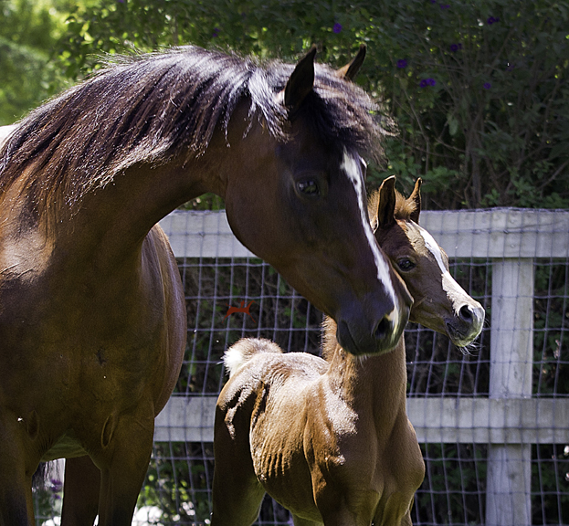 MM Sabiine and her 2016 Colt by Audacious ps