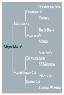 Major Mac V - Pedigree
