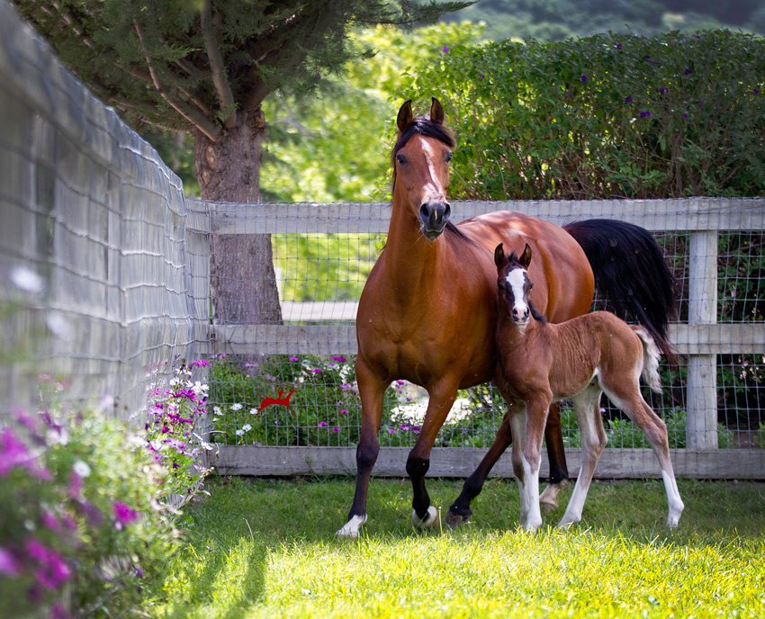 Ames Perfection and her 2016 Major Mac V colt, A Mac Attack V
