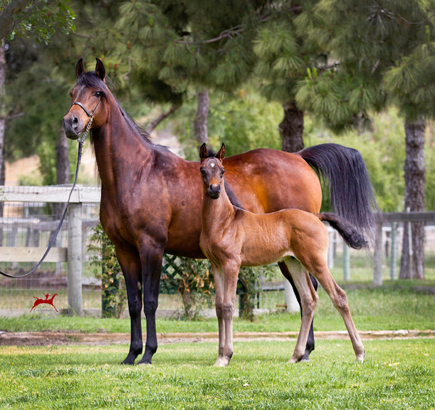 Calalilly and 2016 colt, Calimesa Sun V