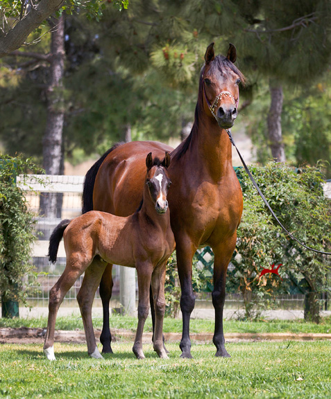 Satine and 2016 Audacious Filly