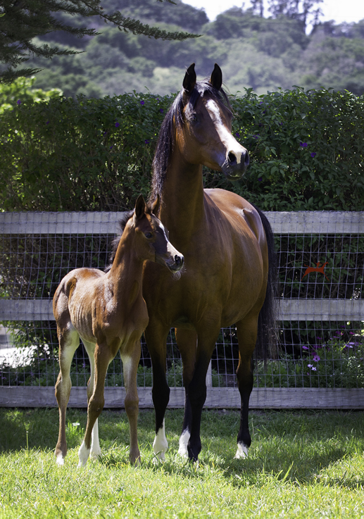 Sweet Caroline and 2016 JEJ filly