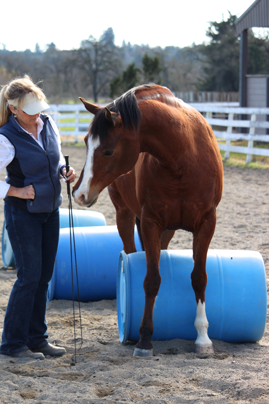 Julie Renfro-Cross - Develop confidence in your young horse clinic