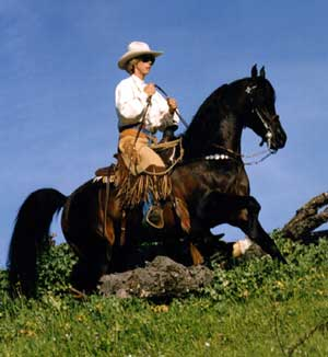 Desperado V Varian Arabians Stallions At Stud Horses For Sale Major Mac V Bay Abi Bay El Bey Huckleberry Bey Moska Mosquerade V Sweet Shalimar Mares Foals Breeding Arroyo Grande California