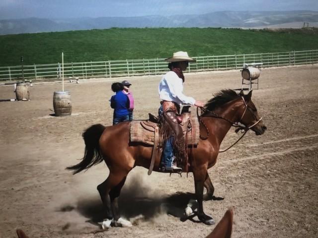 Working Equitation 101