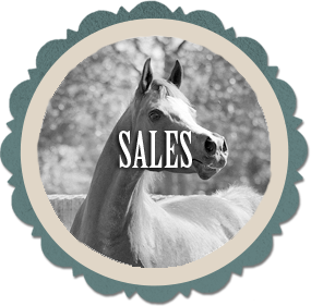 Click to view horses available for purchase at Varian Arabians