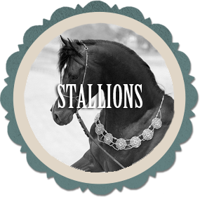 Click to view Stallions standing at Varian Arabians