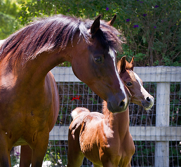 MM Sabiine and Audacious colt
