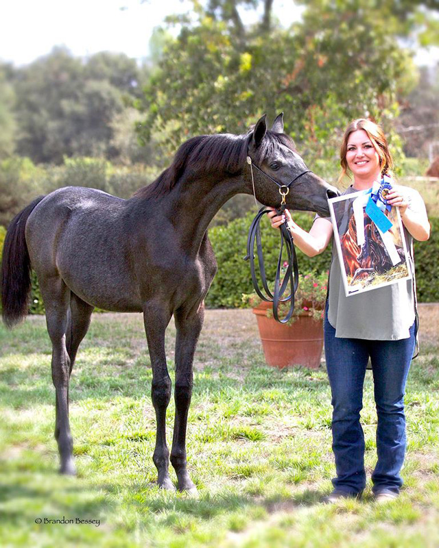 2017 Arabian Oaks Breeders Jamboree - Santa Nella V: 1st Place Weanling Fillies - Halter Type