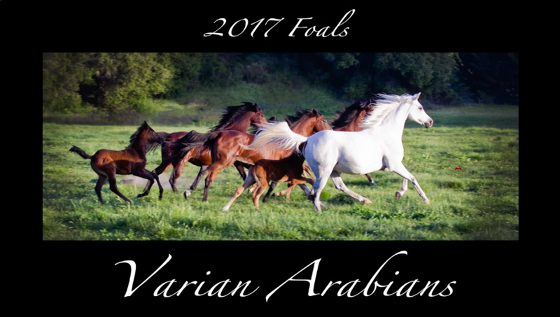 2017 foals and mares video thumb