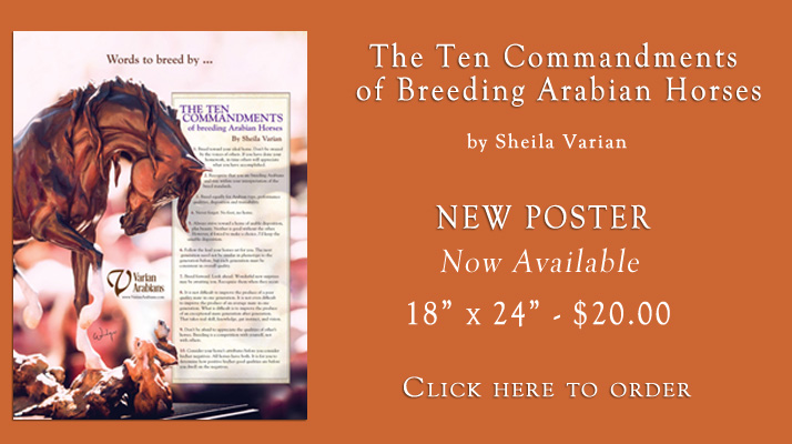 New Poster Available: The 10 commandments of breeding arabian horses by Sheila Varian