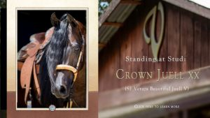 At Stud: Crown Juell XX