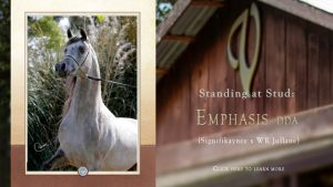 At Stud: Emphasis DDA