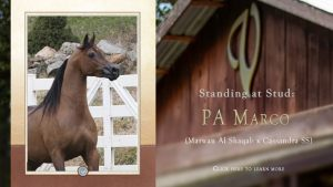 At Stud: PA Marco