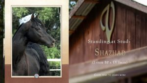 At Stud: Shazhad
