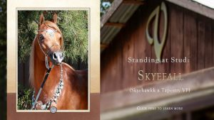 At Stud: Skyefall