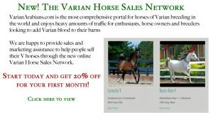 The Varian Horse Sales Network