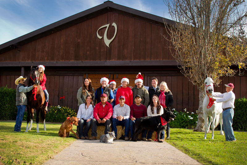 2016 Varian Arabians Christmas Group
